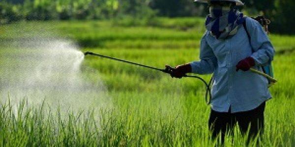 Trabalhadores rurais sofrem sequelas com agrotóxicos