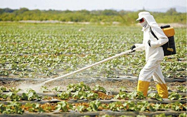 Governo Bolsonaro quer avançar na liberação de agrotóxicos