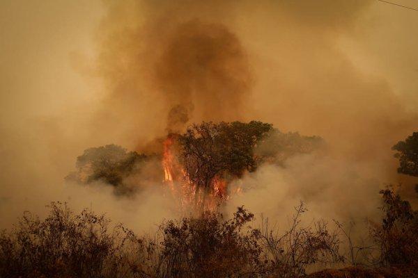 PF exige término de contrato com empresa que fornece imagens via satélite do Pantanal