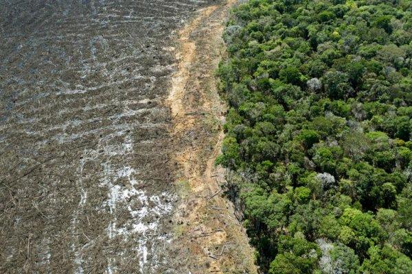 Desmatamento na Amazônia bate recorde de 10 anos